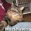 Marshawna was adopted from the Cat House and Adoption Center on Saturday, January 11, 2014.