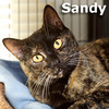 Sandy was adopted from the Cat House and Adoption Center on Saturday, November 9, 2013.<br /> <br /> Sandy<br /> <br /> Look at me, I am Sandy.<br /> <br /> I did not roll in like the hurricane or dance in the movie Grease, although I am a survivor and I do want to make an impact on your life. Low impact.
