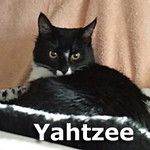 Yahtzee was adopted from the Cat House and Adoption Center on Saturday, November 30, 2013.