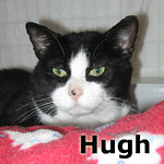 Trillium and Hugh were adopted from the Cat House and Adoption Center on Friday, November 22, 2013.<br /> <br /> Hugh<br /> <br /> Duck Dynasty.<br /> <br /> A rough exterior covers the marshmallow interior of this large handsome guy. Without demands, his eyes can melt your heart and his kindness keeps you coming back for more.