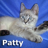 Charlie and Patty were adopted from the Cat House and Adoption Center on Sunday, December 22, 2013.<br /> <br /> Patty<br /> <br /> Hi'ya Chuck!<br /> <br /> Patty is almost the opposite of loud and outspoken, but she is a charmer if you have patience and give her the time to settle in and turn it on. A lovely girl.