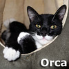 Orca was adopted from his foster home on January 1, 2014.