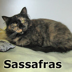 Sassafras was adopted from the Cat House and Adoption Center on Saturday, November 16, 2013.<br /> <br /> Sassafras<br /> <br /> Abandoned.<br /> <br /> Sassy found herself choosing a home that would provide her some comfort while she was wandering the streets, but she soon found that this house was sold. Time to move on again. Do you have room for a Sassafras?