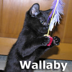 Wallaby and Wombat (sister and brother) were adopted together from Steamboat Animal Hospital on Friday, December 13, 2013.