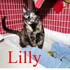 Lilly was adopted from the Cat House and Adoption Center on Sunday, December 29, 2013.