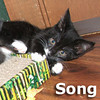 Song and Dance were adopted from their foster home on Thursday, December 12th, 2013.