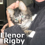 Eleanor Rigby was adopted from the Cat House and Adoption Center on Saturday, November 16, 2013.