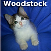 Woodstock was adopted from the Cat House and Adoption Center on Saturday, December 21, 2013.<br /> <br /> Woodstock<br /> <br /> Mechanic at heart.<br /> <br /> He flits and flies around anticipating your moves and is there to lend a paw when you need a little help. Woodstock may not be an ace at catching the ball, but he can sure