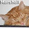Marshall was adopted from his foster home on January 1, 2014.