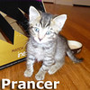 Prancer was adopted from the Cat House and Adoption Center on Sunday, January 5, 2014.