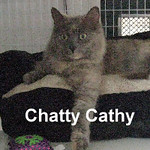 Jiminy Cricket & Chatty Cathy were adopted together from the Cat House and Adoption Center on Saturday, November 2, 2013.