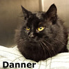 Danner was adopted from the Cat House and Adoption Center on Sunday, January 5, 2014.