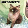 Burnadette was adopted from the Cat House and Adoption Center on Saturday, December 21, 2013.