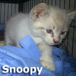 Snoopy was adopted from his foster home at South Bay Veterinary Hospital on Friday, November 15, 2013.