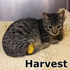 Hamlet and Harvest (brother and sister) were adopted together at Steamboat Animal Hospital on Wednesday, October 30, 2013.