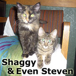 Shaggy and Even Steven were adopted together from the Cat House and Adoption Center on Saturday, December 28, 2013.