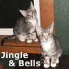 Jingle and Bells (brother & sister) were adopted from their foster home on Thursday, December 12, 2013.