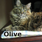 Olive was adopted from the Cat House and Adoption Center on Saturday, December 28, 2013<br /> <br /> Olive<br /> <br /> Take too!<br /> <br /> Charming and beautiful, Olive awaits her chance for that special forever home and a person or a family of her own. Olive is large, loving and playful.