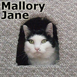 Mallory Jane was adopted from the Cat House and Adoption Center on Saturday, November 11, 2013.<br /> <br /> Mallory Jane<br /> <br /> 10 step program<br /> <br /> Mallory Jane has forgiven those who had all her claws removed and left her to hide under a deck outside. Mallory is doing amazingly well and is ready to interview you for a home.