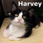Harvey was adopted from Steamboat Animal Hospital on Thursday, October 31, 2013.