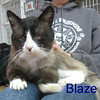 Blaze was adopted from the Cat House and Adoption Center on Saturday, November 2, 2013.