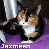 "Jazmeen ""Jazzy"" was adopted from the Cat House and Adoption Center on Saturday, January 4, 2014."