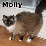 Molly was adopted from the Cat House and Adoption Center on Saturday, November 30, 2013.