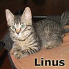 Linus was adopted from his forster home at Healthy Pets Animal Hospital on Wednesday, November 6, 2013.
