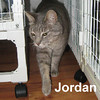 Jordan was adopted from the Cat House and Adoption Center on Saturday, November 9, 2013.