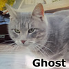 Ghost was adopted from the Cat House and Adoption Center on Saturday, January 18, 2014.
