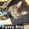 Fuzzy Boy was adopted from Steamboat Animal Hospital on Saturday, November 16, 2013.