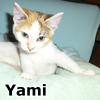 Yami was adopted from the Cat House and Adoption Center on Saturday, November 23, 2013.