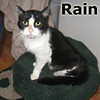 Rain was adopted from her foster home on Saturday, January 18, 2014.<br /> <br /> Rain<br /> <br /> A Ray of Sunshine on a Rainy Day.<br /> <br /> Sleeping under the evergreens, begging for handouts, and searching for a kind soul. This incredible special senior lady deserves being a kept lady with large amounts of kindness.