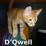 D'Qwell was adopted from his foster home at the Cat House and Adoption Center on Saturday, December 21st, 2013.