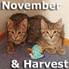 Harvest and November (sister & brother) were adopted from the Cat House and Adoption Center on Saturday, December 7, 2013.<br /> <br /> Harvest and November<br /> <br /> Like two peas in a pod.<br /> <br /> Or maybe it is two beans in a casserole? What ever your favorite side dish is, this darling duo would be happy to share in the festivities. Fuzzy and fun, Harvest and November will be there to warm your lap for the holidays.