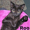 Roo was adopted from the Cat House and Adoption Center on Saturday, December 14, 2013.