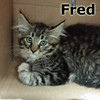 Fred was adopted from the Cat House and Adoption Center on Sunday, July 27, 2014.<br /> <br /> Fred<br /> <br /> What's on your list?<br /> <br /> If you're going to the department store, it probably was not Fred, yet that is where he found himself. Safe and cared for, Fred is awaiting your visit to take him home.