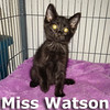 Miss Mary Watson got adopted from her foster home at Steamboat Animal Hospital on Monday, July 7, 2014.