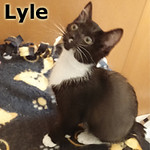Lyle was adopted from the Cat House and Adoption Center on Saturday, June 7, 2014.<br /> <br /> Lyle<br /> <br /> Love It!<br /> <br /> He is a long, tall Texan waiting to four-step his way into your life! With a healthy appetite for pounce and play, Lyle would be happy to have a partner to tango with.