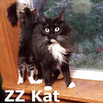 ZZ Kat and Houston (mother and son) were adopted together from their foster home on Wednesday, June 18th, 2014.