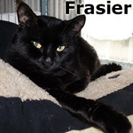 Frasier was adopted from the Cat House and Adoption Center. <br /> <br /> Frasier<br /> <br /> Very regal.<br /> <br /> Frasier is seeking some solitude with a lot of love and affection. A quiet environment would let him be all he wants to be and show you how special he is.
