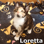 Loretta was adopted from the Cat House and Adoption Center on Tuesday, June 17, 2014. <br /> <br /> Loretta<br /> <br /> Award winner.<br /> <br /> Hall of Fame? How 'bout a long hallway to chase toys up and down in, and a cavern made of cardboard to mine her treats and treasures.
