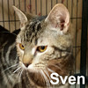 Sven was adopted from the Cat House and Adoption Center on Saturday, July 26, 2014.