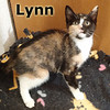 Lynn was adopted from the Cat House and Adoption Center on Saturday, June 7, 2014.<br /> <br /> Lynn<br /> <br /> I beg your pardon?<br /> <br /> Her promises may not include rose gardens and sunshine, but you will get a fun furry friend to share your love with, and Lynn will make you smile.