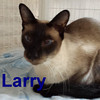 Larry and Stewart (brothers) were adopted from the Cat House and Adoption Center on Saturday, May 24, 2014.