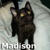 Madison and Maverick were adopted together from the Cat House and Adoption Center on Saturday, June 28, 2014.