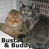 Buddy and Busta were adopted from the Cat House and Adoption Center on Saturday, July 5, 2014.<br /> <br /> Busta and Buddy<br /> <br /> Double your pleasure ... double your fun, two cats are better than one!<br /> <br /> Life happens and thank goodness for brotherly bonds and togetherness. With no family to ease them into the transition of losing their owner, these two boys are awaiting a special home together. Each one is so sweet, loving and social they will melt your hearts.