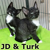 JD and Turk were adopted from their foster home at Steamboat Animal Hospital on Thursday July 3rd, 2014.