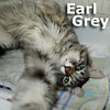Earl Grey was adopted from the Cat House and Adoption Center on Saturday, July 12, 2014.<br /> <br /> Earl Grey<br /> <br /> Sweet as Tea.<br /> <br /> Dumped due to an injury by his owners. Repaired and neutered, this handsome guy is ready to find the home that see's how precious Earl really is.