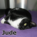 Jude was adopted from the Cat House and Adoption Center on April 9, 2014.<br /> <br /> Jude<br /> <br /> Hey Jude ...<br /> <br /> Jude is taking his sad life and hoping you can make it better. He is choosing not to carry the weight of the world on his shoulders and opening up his heart to let you in. Come meet Jude.